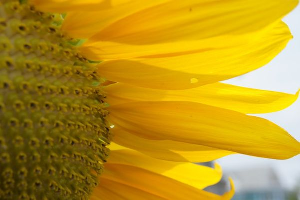 image from thatlongyellowline.typepad.com